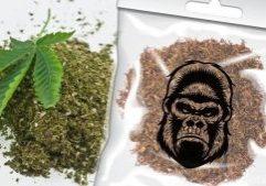 gorillatobacco